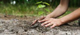 plantare-copaci